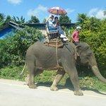 Elephant Chiang Rai