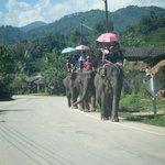 Elephants Chiang Rai