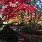 japanese garden ashland, OR