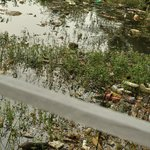 beachside houses have everything dumped including excreta into canal &it accumulates right here