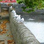 Gulls on the rail outside B&B
