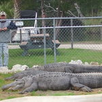FREE Live Alligator Exhibit-Visit Sal,Mo & Nella from 8am until 5pm daily