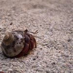 one of hermit crab friends