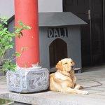 Dali the retriever keeps an eye on the proceedings.