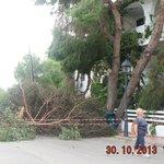 Fallen tree on the hotel