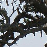 Goedt kijken 2 luipaard