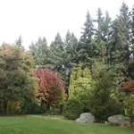 Árvores no outono