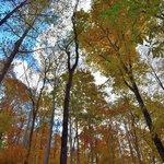 Virgin Falls Trail