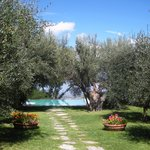The garden with olive trees and the beautiful infinity pool