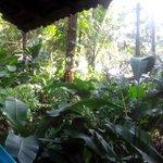 garden around the hut