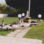 Sarakina play area with Ducks