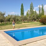 Pool + Olive trees in background