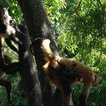 Zona de monos