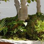 a nice grove specimen