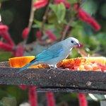 Breakfast birdiwatching