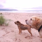 Dogs holiday