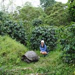Giant tortoises right outside your door
