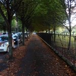 Tree lined avenue through nearby Herbert Park
