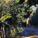 Path to the farmhouse