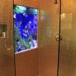 Fish tank in the Cleopatra bathroom