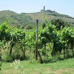Agriturismo La Pievuccia Foto