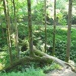 Ботанический сад, из 1го упавшего дерева получилось 12 )