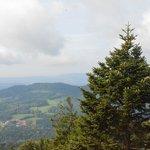 Weite Aussicht vom Waldwipfelweg