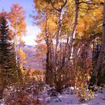 Hike in snow with Aspens @ peak color..