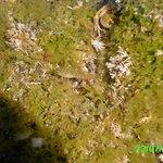 ein junger Fisch in der Bildmitte