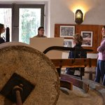 laissez vous conter la culture méditéranéenne de l'olivier