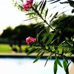 L'élégante simplicité de la Provence