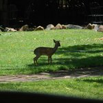 First sight of wildlife in hotel grounds