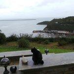 Satchmo the Pentower cat, surveying Llareggub.