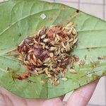 Do-It-Yourself Paan