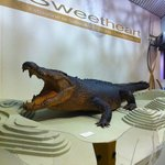 Sweetheart the saltwater croc