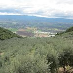 views of the olive trees and valley below