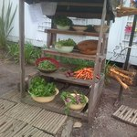 Our Organci Veg stand