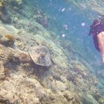 Gili Air turtle on the house reef...and Jayne