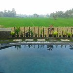 Pool with paddy field view