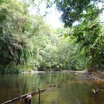 "the river gets quite ""closed in"" by the jungle - brilliant!!"