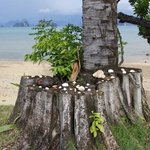 Shells & coral decorate the foreshore