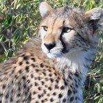 Ernest African Adventurs Safaris