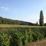 View of more corn fields