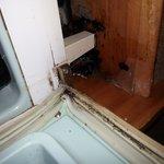 leaking / moldy /dusty bar fridge