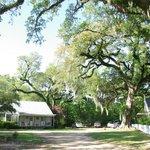 det hus vi lejede lå rigtig flot ved de 250 år gamle egetræer