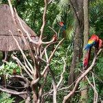 Красно-синие ара