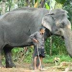 Rani, the Elephant!