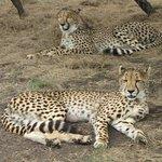 Kwa Cheetah Project