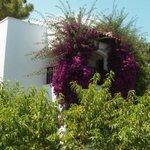 бунгала обвивают цветниковые кустарники