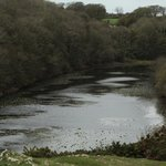 A view of the pond at Bosherton